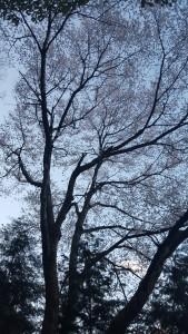 (2016.0402)花見